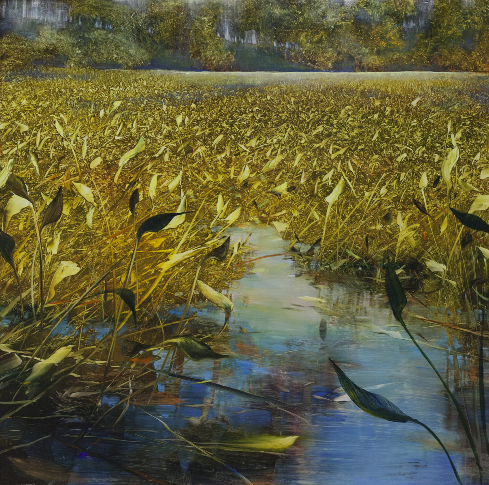 David Dunlop - Pond Thick with Lilies