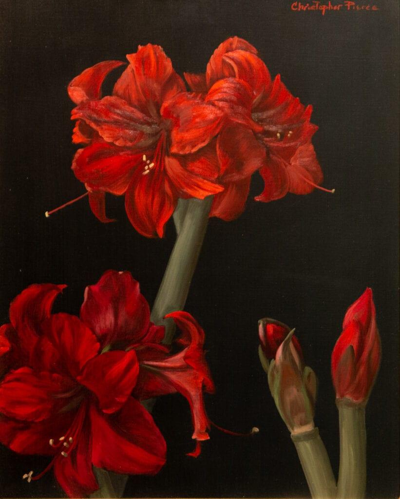 Christopher Pierce - Amaryllis