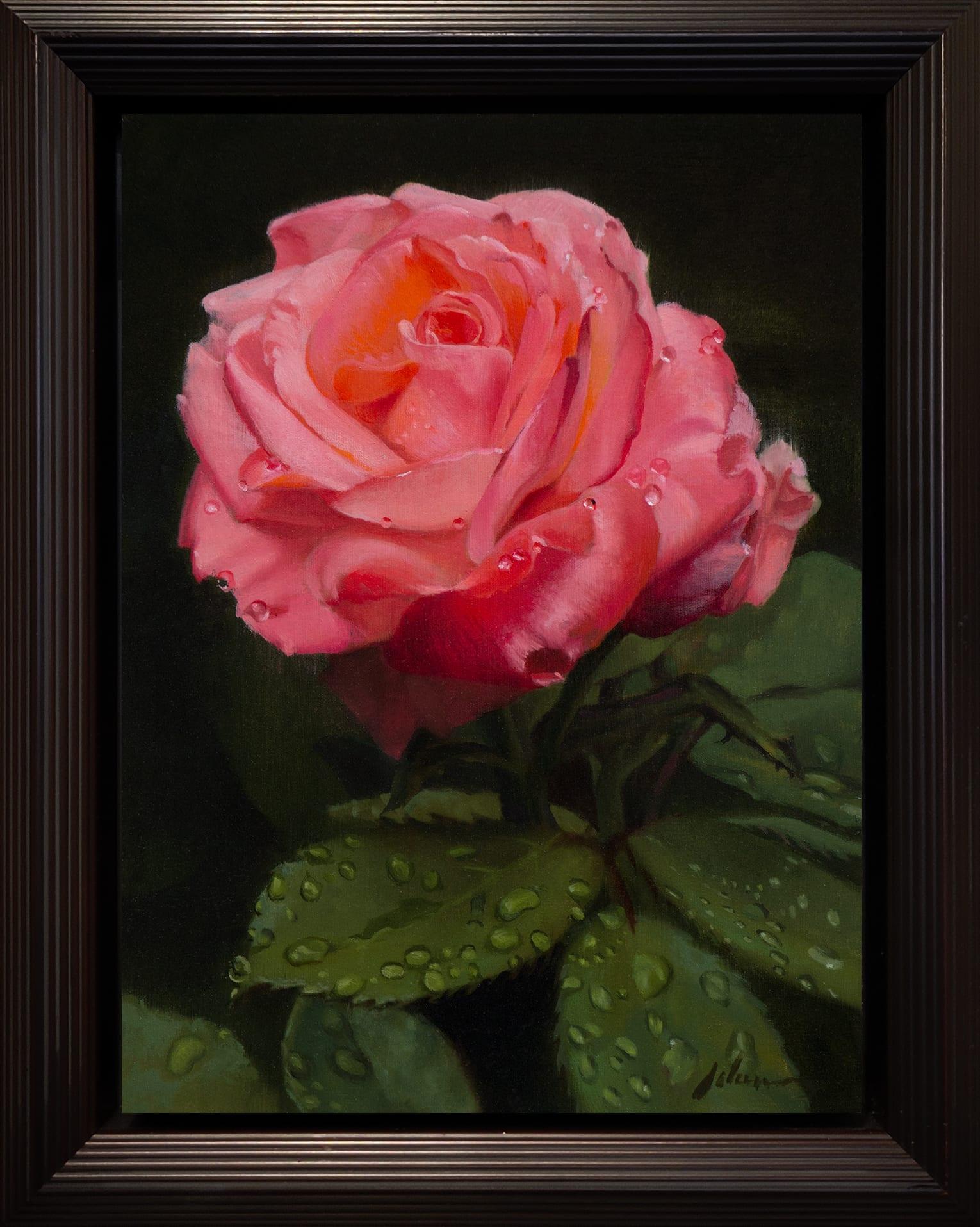Adams_Pink_Rose_12x9_Frame